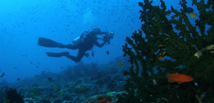 Resposta de la comunitat del coral·ligen del PN de Cabrera al canvi climàtic