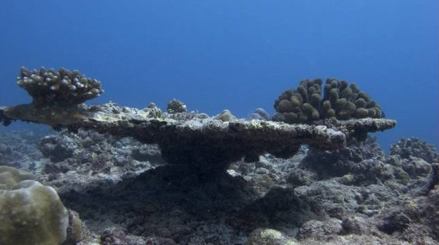 Planned epiphenomena: supporting reef resilience in the face of changing fishing practices in the Lakshadweep Islands