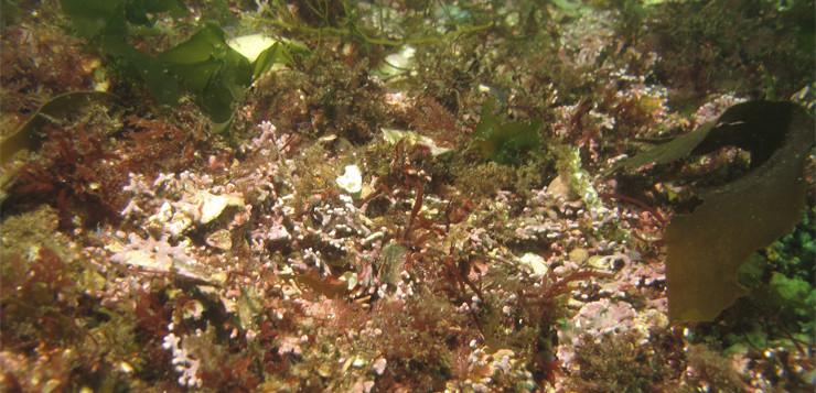 Caracterización genética de la biodiversidad y alteraciones en comunidades bentónicas de los PN marinos