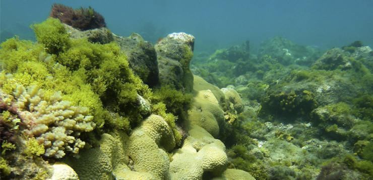 Resiliència marina estudiant transicions ambientals crítiques per minimitzar el col·lapse del sistema socio-ecològic
