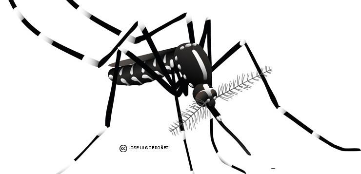 Invasió del mosquit tigre a Espanya: salut pública i canvi global