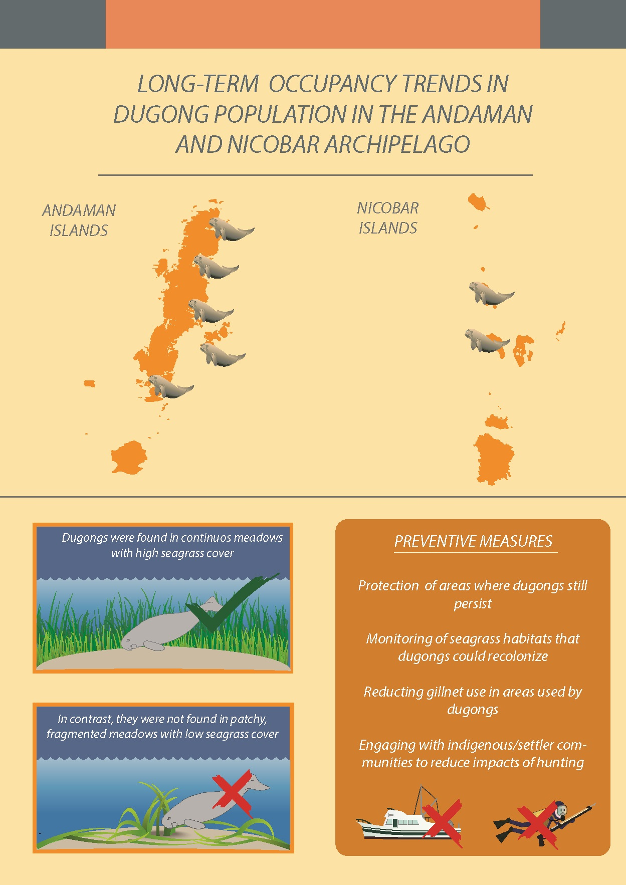 dungong-infografia-6
