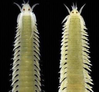 especies críptiques 740x360