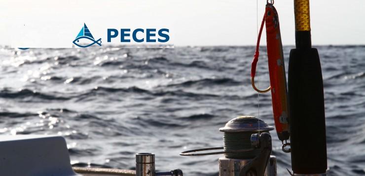Pesca recreativa a Espanya: Categorització, avaluació i seguiment