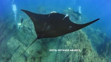 Octavio_Aburto 2