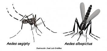 Mosquito Alert i la ciència ciutadana arriben a Brussel·les