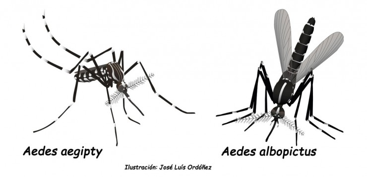 aedes-web