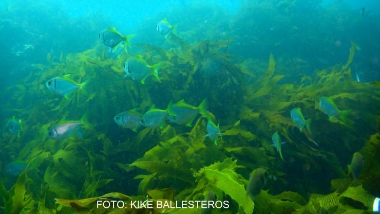 noticia-kelps2