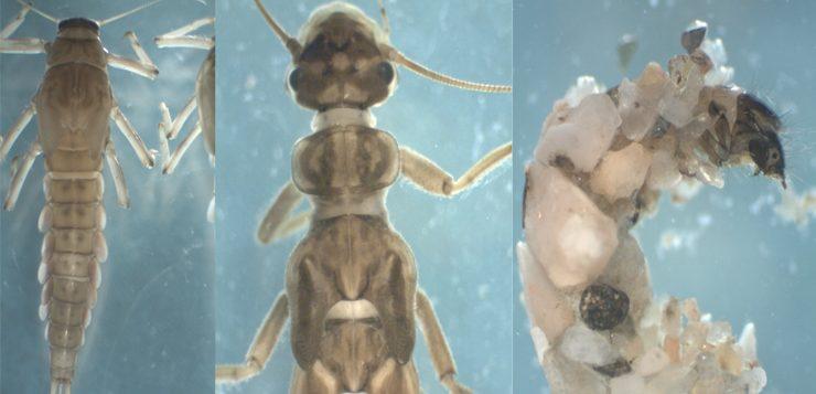 Las comunidades de macroinvertebrados de la Riera de Espinelves (Montseny): seguimiento anual
