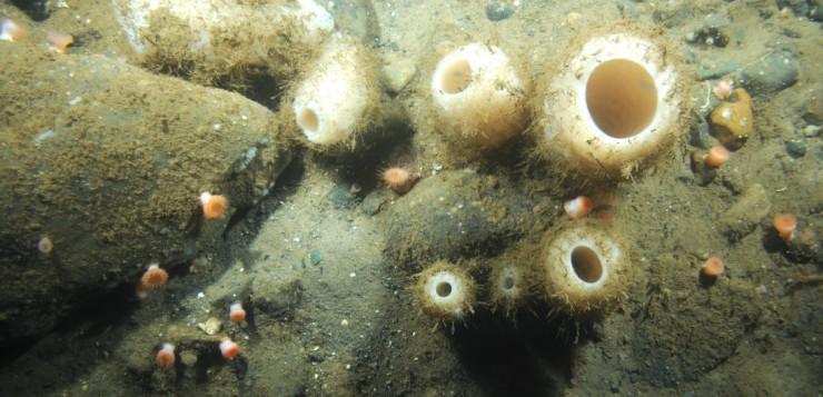 Ecosistemas de esponjas de aguas profundas del Atlántico Norte