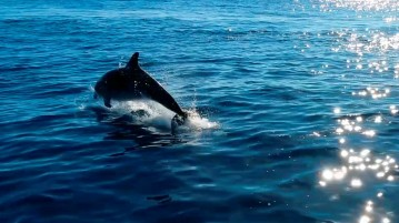 delfines101