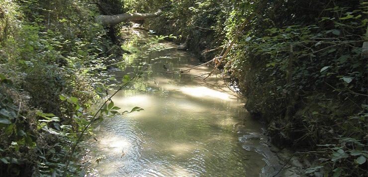 Seguimiento anual de las comunidades de macroinvertebrados de la Riera de Rimentol (cuenca del río Ter)