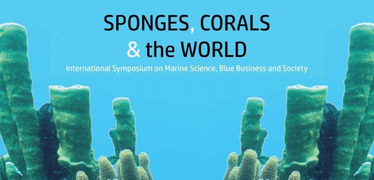sponges nueva imagen