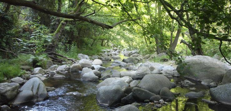 Avaluació dels efectes directes i indirectes del canvi global sobre la inctiofauna nativa fluvial