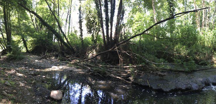 Evaluación de los factores hidro-morfológicos y químicos que controlan el papel biorreactivo de la interfase río-bosque de ribera para mitigar los efectos de los efluentes de plantas de tratamiento de aguas residuales en ríos de flujos intermitentes